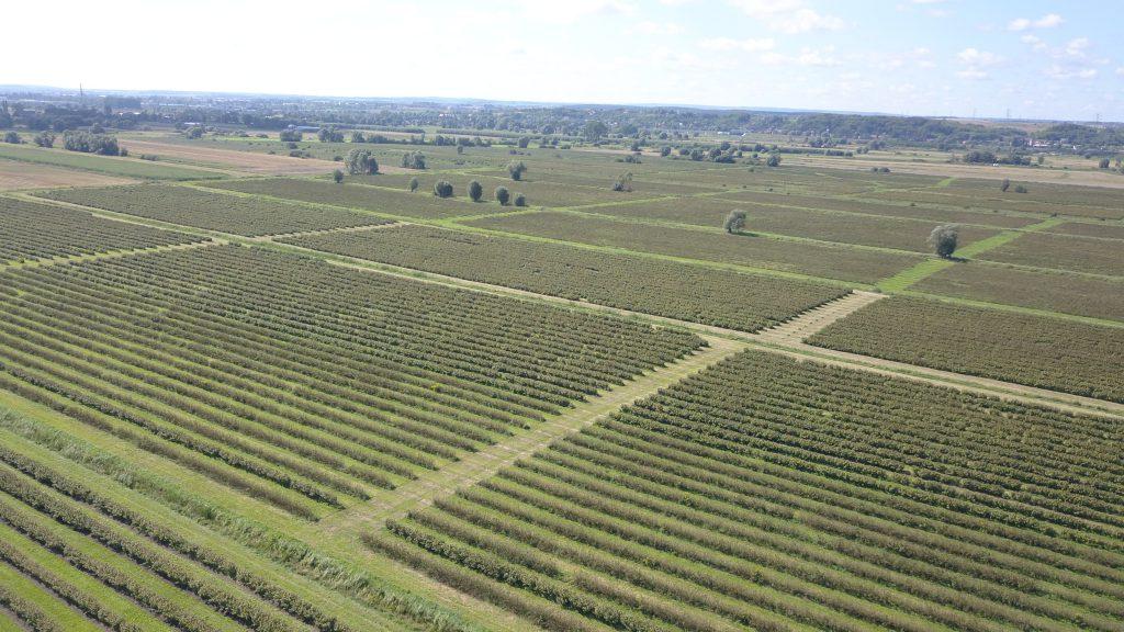 widok na plantacje