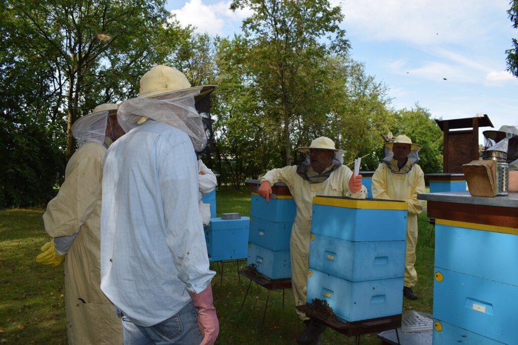 Leczenie rodziny pszczelej