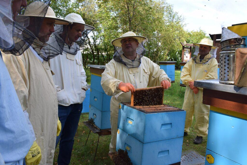 Ocena siły rodziny pszczelej