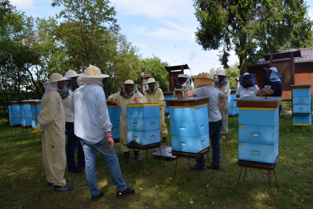 Przegląd rodziny pszczelej