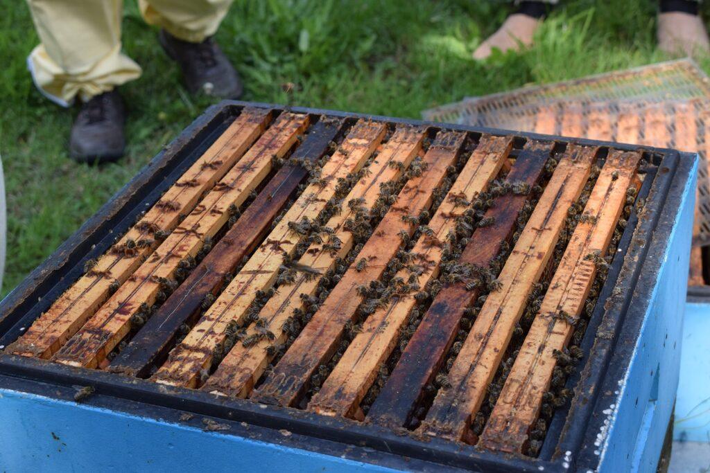 Rodzina pszczela