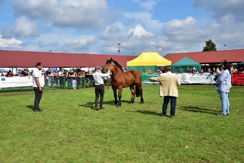 1- komisja ocenia konie