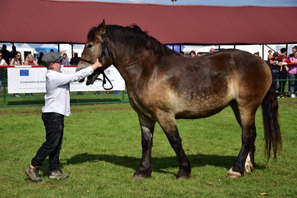 2- młody hodowca prezentuje konia na ringu