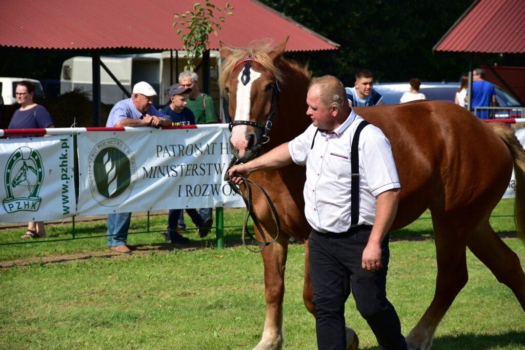 hodowca prezentuje konia na ringu
