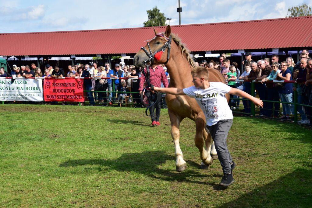 3- młody hodowca i koń na ringu