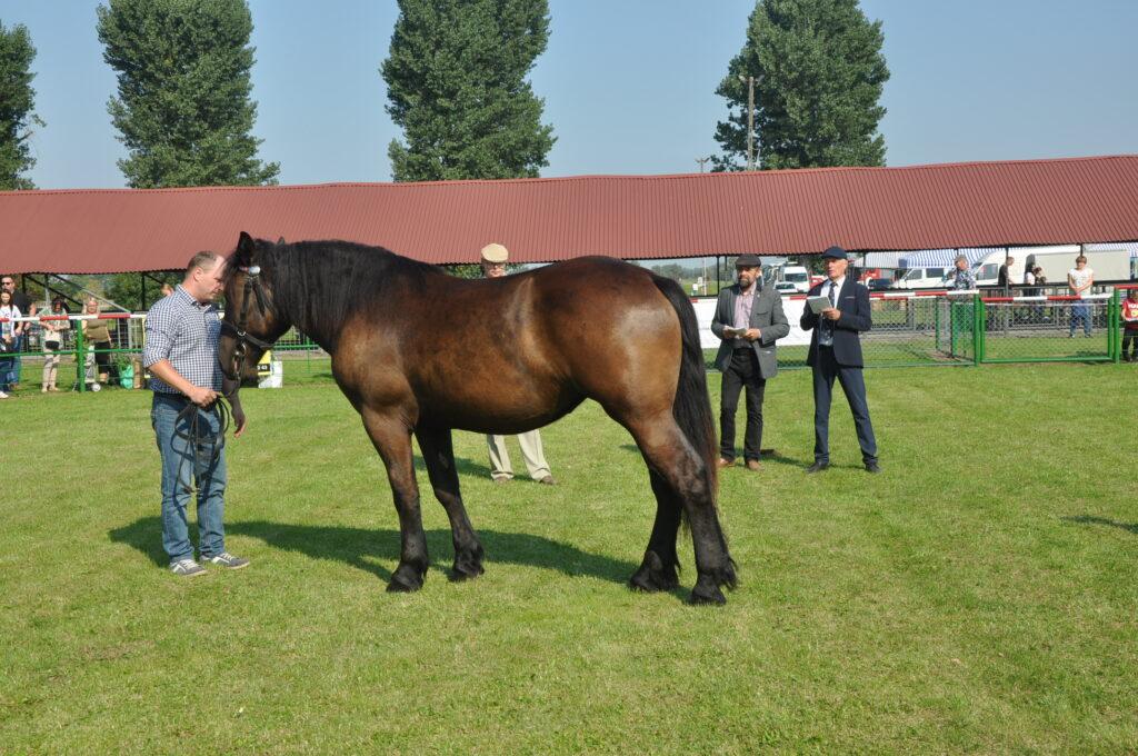 komisja oceniającą konia
