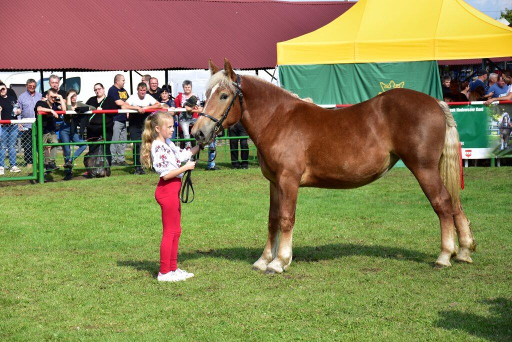 4- młody hodowca prezentuje konia
