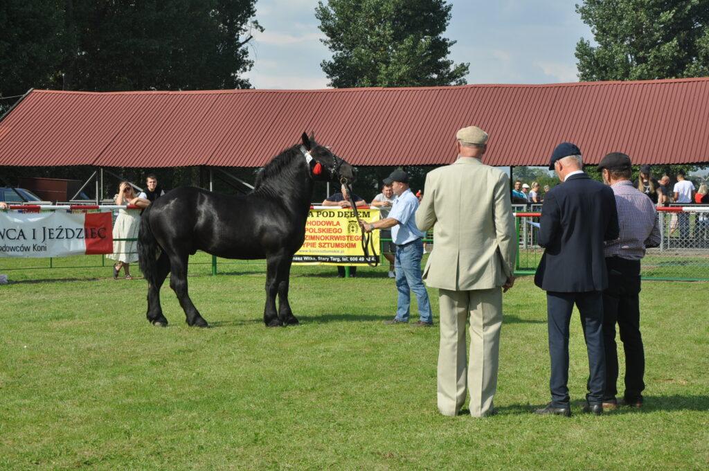 komisja ocenia konia