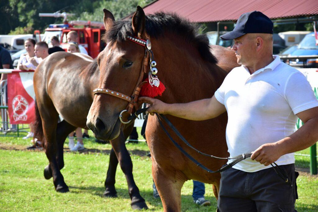 konie sztumskie na ringu - prezentacja