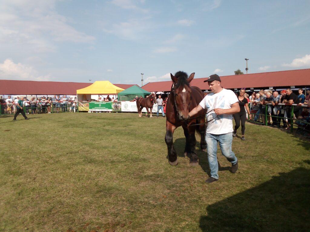 konie na ringu