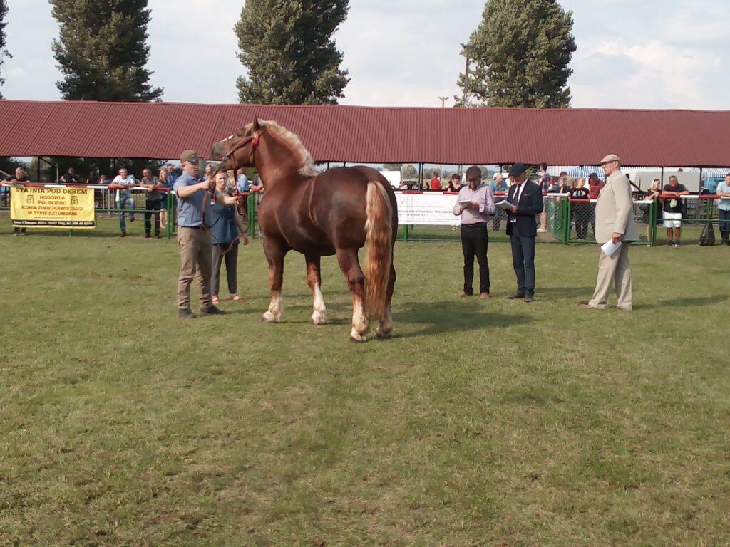 komisja ocenia konie
