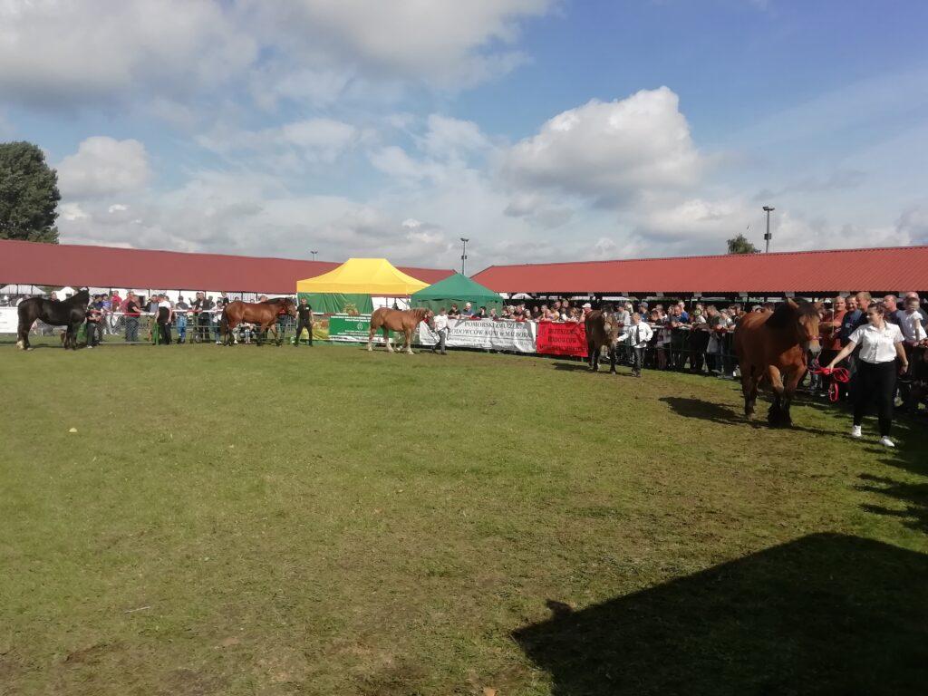 7-prezentacja koni na ringu