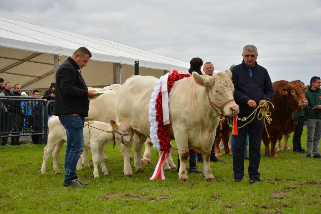 Super Czempion Krajowej Wystawy Bydła Mięsnego