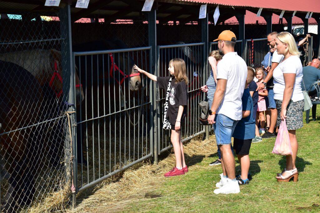 Konie biorące udział w konkursie oraz ich najwierniejsi fani