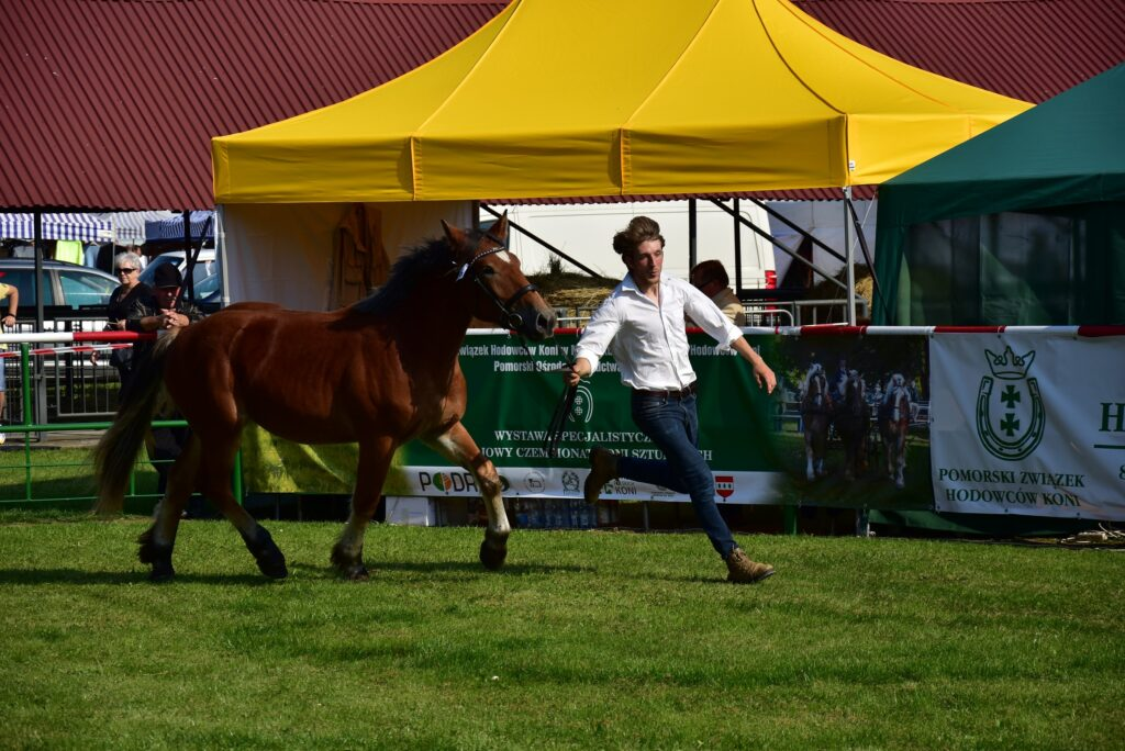 Prezentacja koni podczas konkursku 02