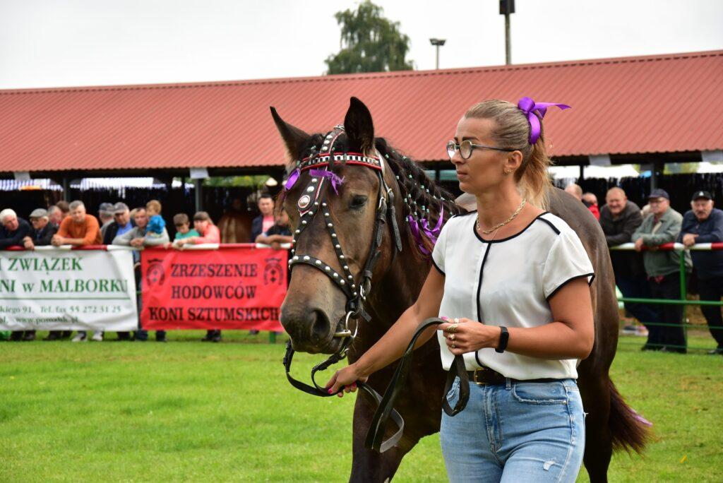 Prezentacja koni podczas konkursu