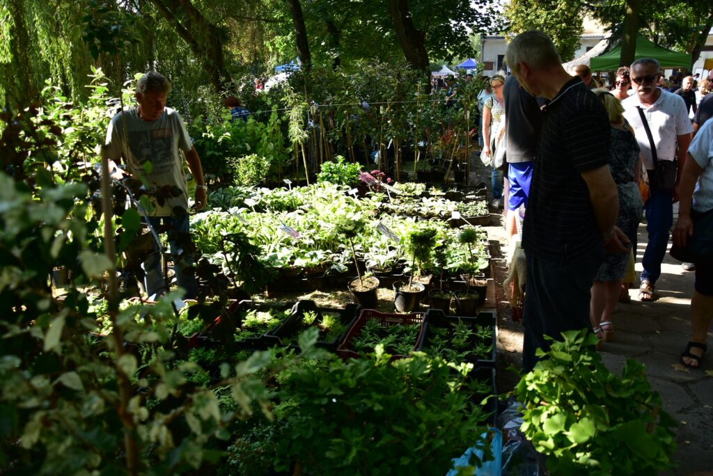 Stoiska ogrodnicze - rośliny ozdobne 01