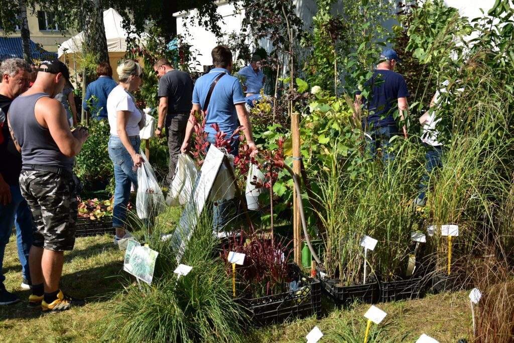 Stoiska ogrodnicze - rośliny ozdobne 02