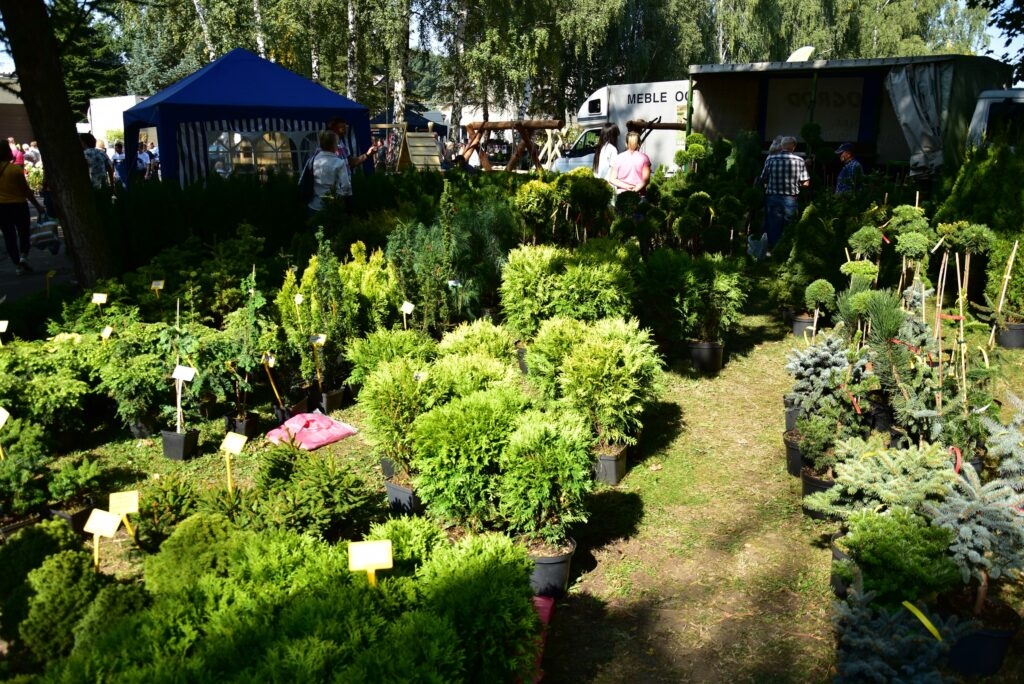 Stoiska ogrodnicze - rośliny ozdobne 04