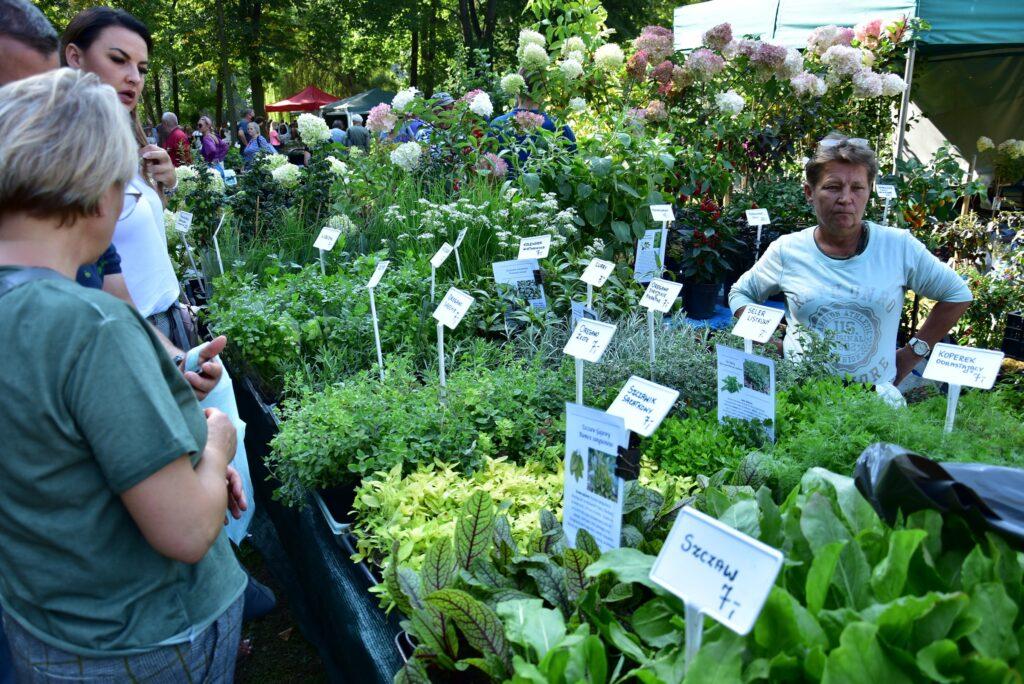 Stoiska ogrodnicze - zioła