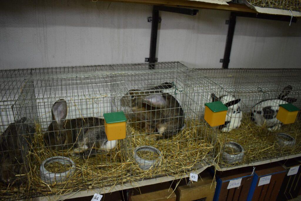 Wystawa królików 2