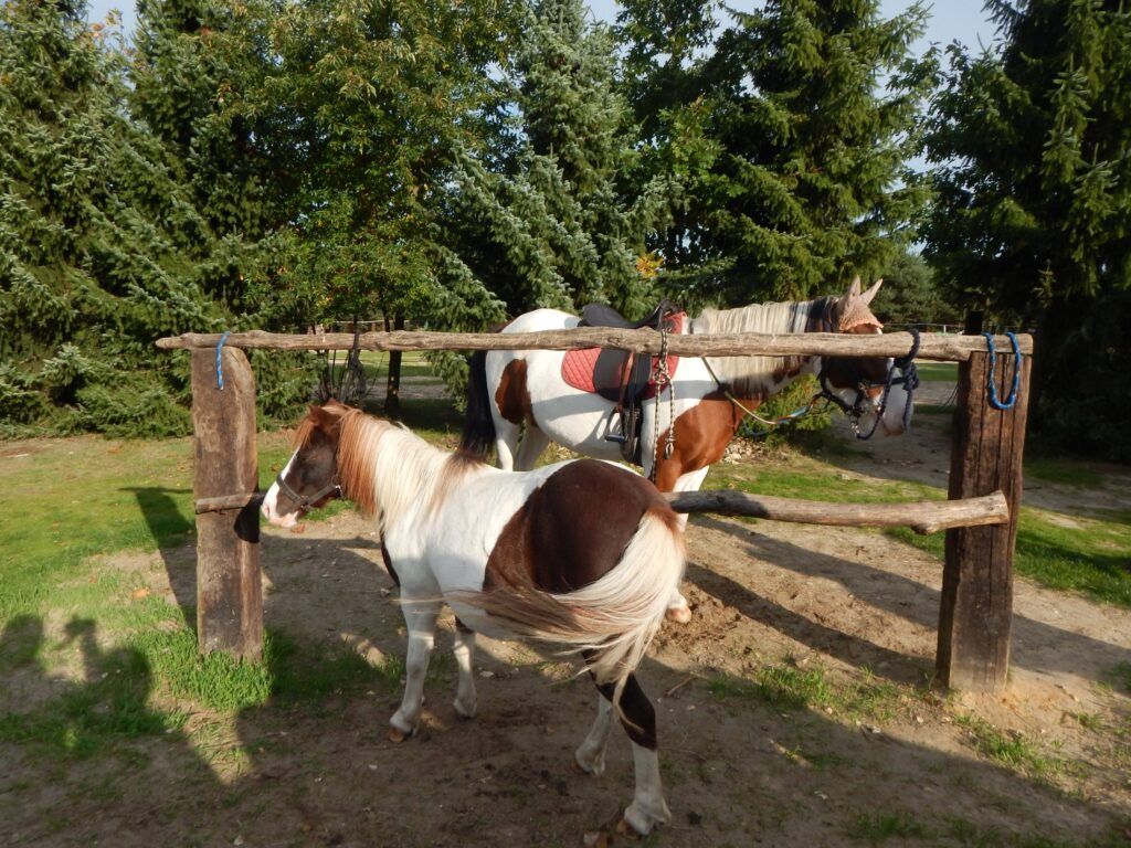 Konie w Agroturystyce Sokole Ranczo